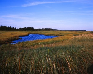 """New Brunswick Marsh, 2005"""